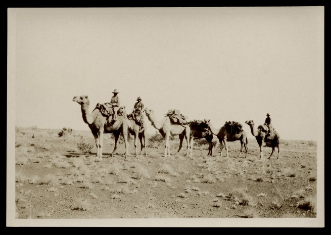 Anonymous photographer. 'Police camels' c. 1930