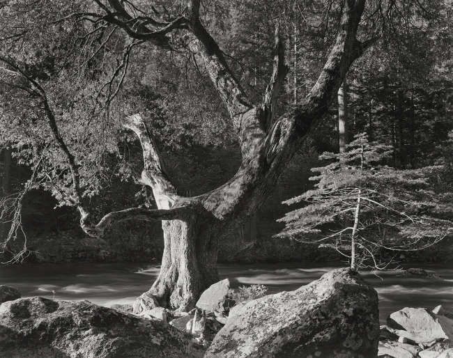 Ansel Adams (American, 1902-1984) 'Early Morning, Merced River Canyon, Yosemite National Park' c. 1950