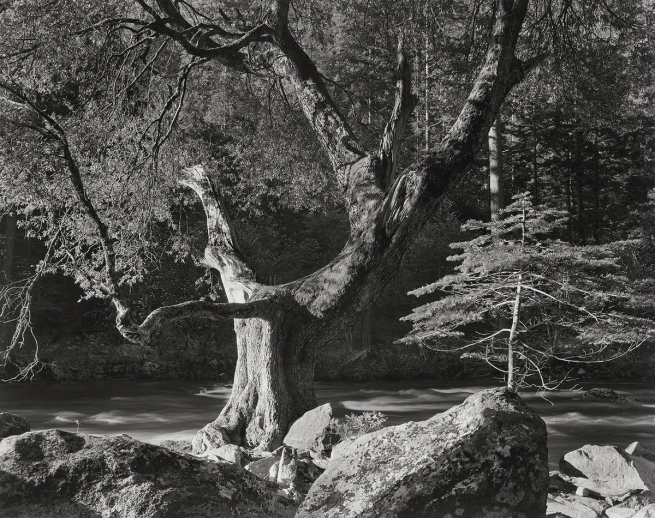 Ansel Adams (American, 1902-1984) 'Early Morning, Merced River Canyon, Yosemite National Park' c. 1950