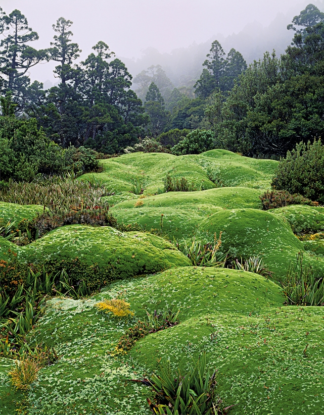 Peter Dombrovskis (Australian, born Germany 1945-96) 'Cushion plants, Mount Anne, Southwest National Park, Tasmania' 1984