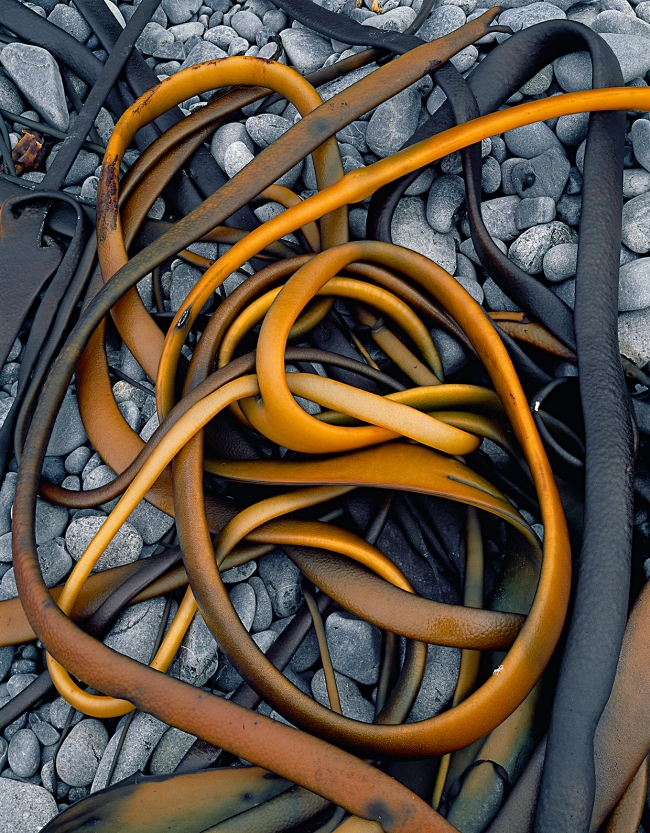 Peter Dombrovskis (Australian, born Germany 1945-96) 'Drying kelp at Sandy Bay, Macquarie Island, Tasmania' 1984