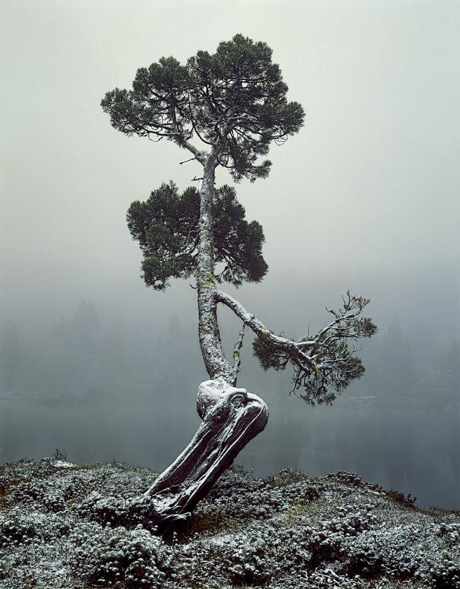 Peter Dombrovskis (Australian, born Germany 1945-96) 'Pencil pine at Pool of Siloam, Walls of Jerusalem National Park, Tasmania' 1982