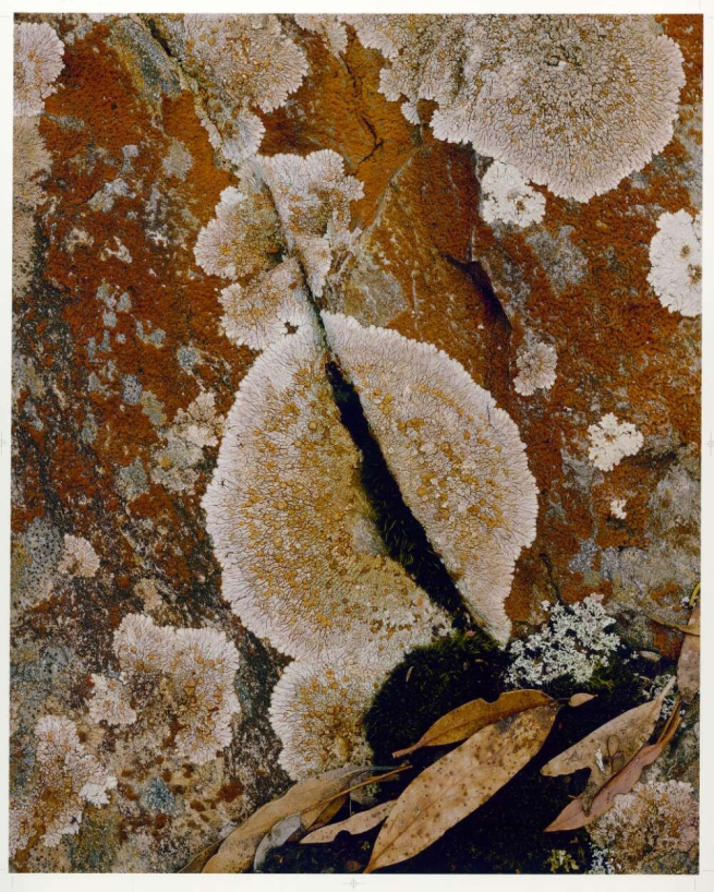 Peter Dombrovskis (Australian, born Germany 1945-96) 'Rock lichen (Crustose lichen), Lake Rodway, Cradle Mountain-Lake St Clair National Park, Tasmania' 1981