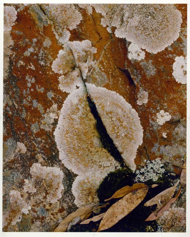 Peter Dombrovskis (Australian, born Germany 1945-96) 'Rock lichen (Crustose lichen), Lake Rodway, Cradle Mountain-Lake St Clair National Park, Tasmania' 1981