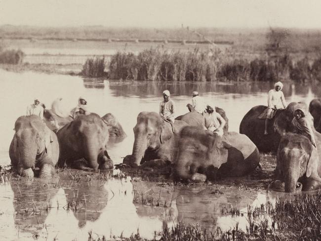 Donald Horne Macfarlane. 'Elephants bathing' 1862 (detail)