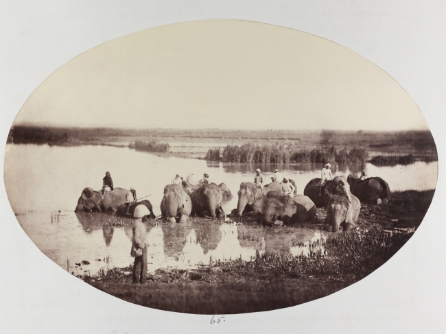 Donald Horne Macfarlane. 'Elephants bathing' 1862