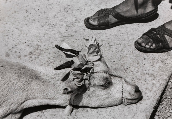 Graciela Iturbide (Mexican, b. 1942) 'La danza de la cabrita, antes de la matanza, La Mixteca, Oaxaca, Mexico' (The Little Goat's Dance, Before the Slaughter, La Mixteca, Oaxaca, Mexico) 1992