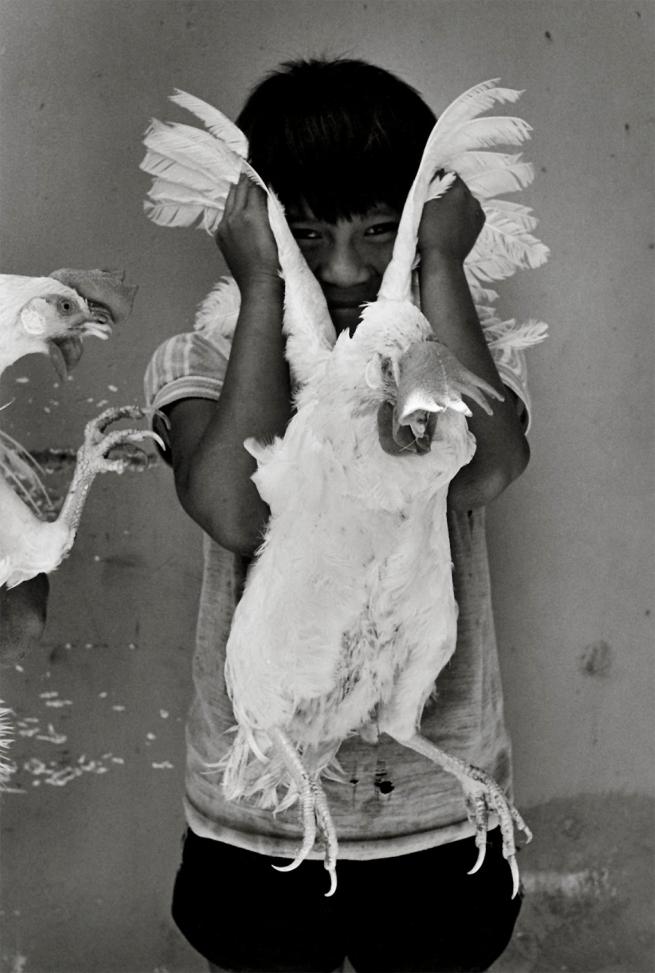 Graciela Iturbide (Mexican, b. 1942) 'El gallo, Juchitán, México' 1986