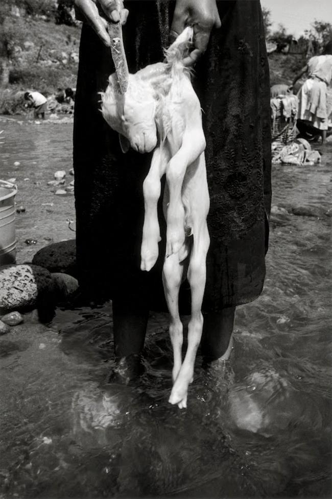 Graciela Iturbide (Mexican, b. 1942) 'El sacrificio, La Mixteca, Oaxaca, México' 1992