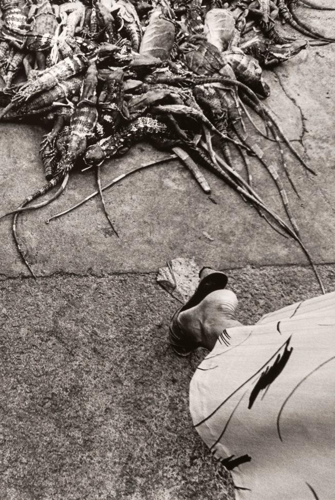 Graciela Iturbide (Mexican, b. 1942) 'Iguanas, Juchitán, México' 1984