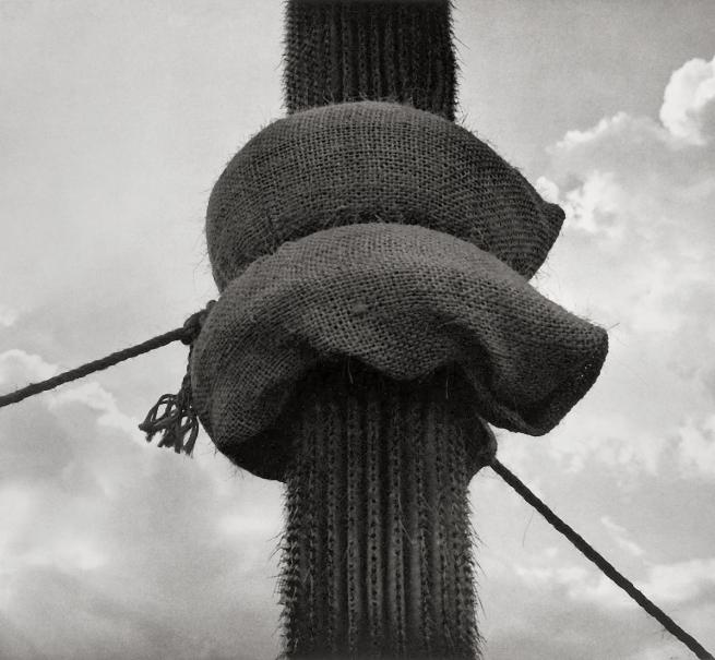 Graciela Iturbide (Mexican, b. 1942) 'Jardín Botánico, Oaxaca, México' 1998-1999