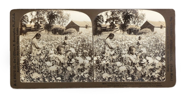 Herbert Ponting (1870-1935) (photographer) 'A poppy field in Manchuria, natives extracting fluid from which opium is made' c. 1902-1907