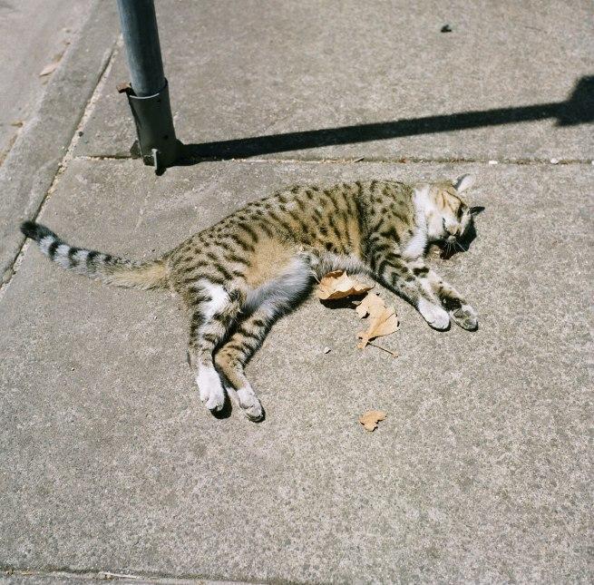 Glenn Slogget. 'Dead cat' 2019