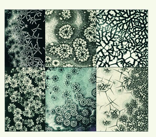 Martin Gerlach. 'Mikroskopische Aufnahmen' 1902-1904