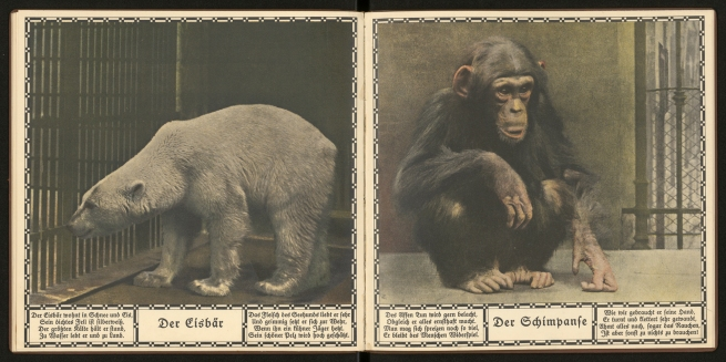 "Austrian State Printing House. ""The Polar Bear"" and ""The Chimpanzee"", From: 'The New Ark. Thirty animal pictures after photographs of nature' 1923"