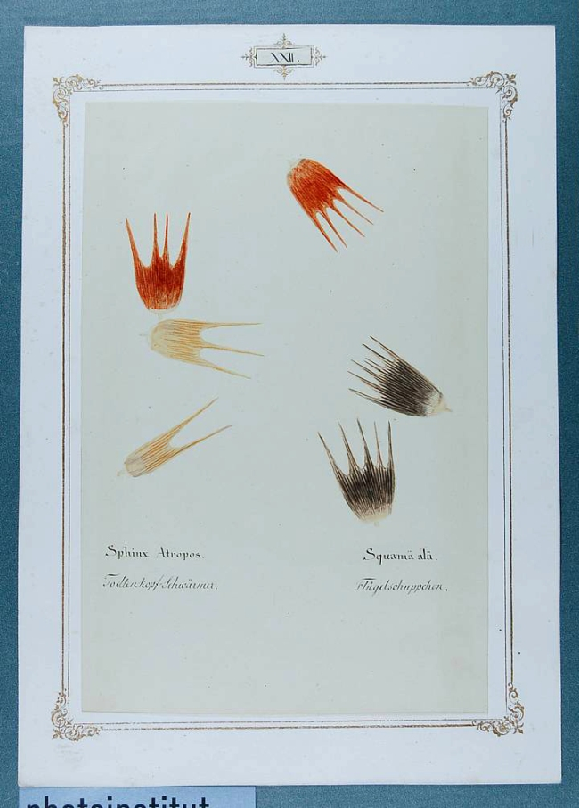 Ernst Heeger. 'Album of microscopic-photographic representations from the field of zoology' 1860