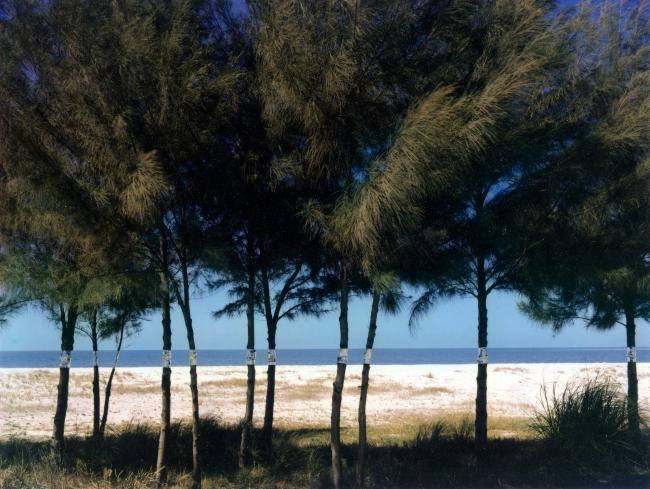 John Pfahl (American, b. 1939) 'Australian Pines, Fort DeSoto, Florida' 1977