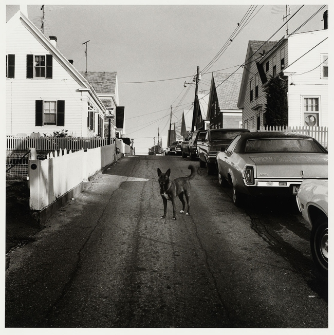 Peter Hujar (American, 1934-1987) 'Dog in the Street, Provincetown' 1976