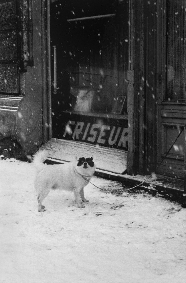 Helga Paris (German, born Poland, 1938) 'Hund, Immanuelkirchstr 1970s' (Berlin 1974-1982)