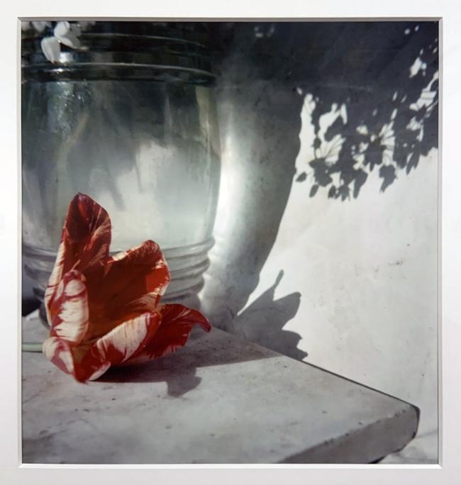 Jacques Henri Lartigue (1894-1986) 'Opio, France, 1963' (installation view)