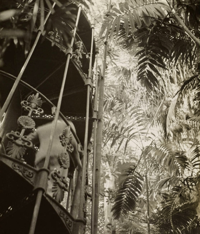 Dora Maar (French, 1907-1997) 'Stairwell and Plants in Kew Gardens' 1934