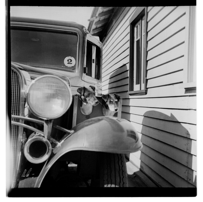 Unknown photographer (Australian) 'Untitled (1932 Chevrolet and dogs)' 1946-47