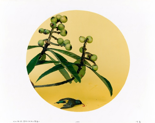 Hong Lei (Chinese, b. 1960) 'After Zhao Ji's loquat and birds (Song dynasty)' 1999