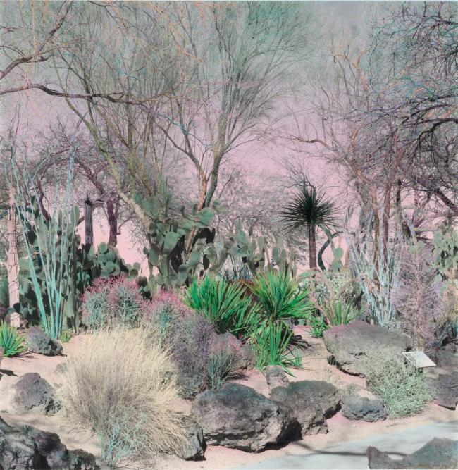 Shi Guowei (Chinese, b. 1977) 'Cactus garden' 2016