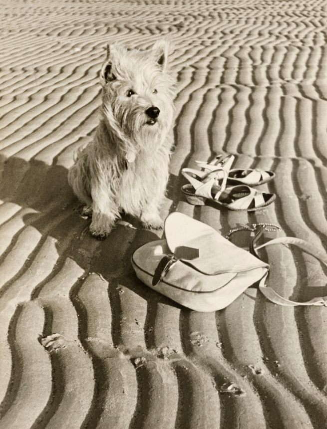 Paul Wolff (German, 1887-1951) and Dr Wolff & Tritschler OHG (German, founded 1927, dissolved 1963) '[Dog at the beach]' 1936