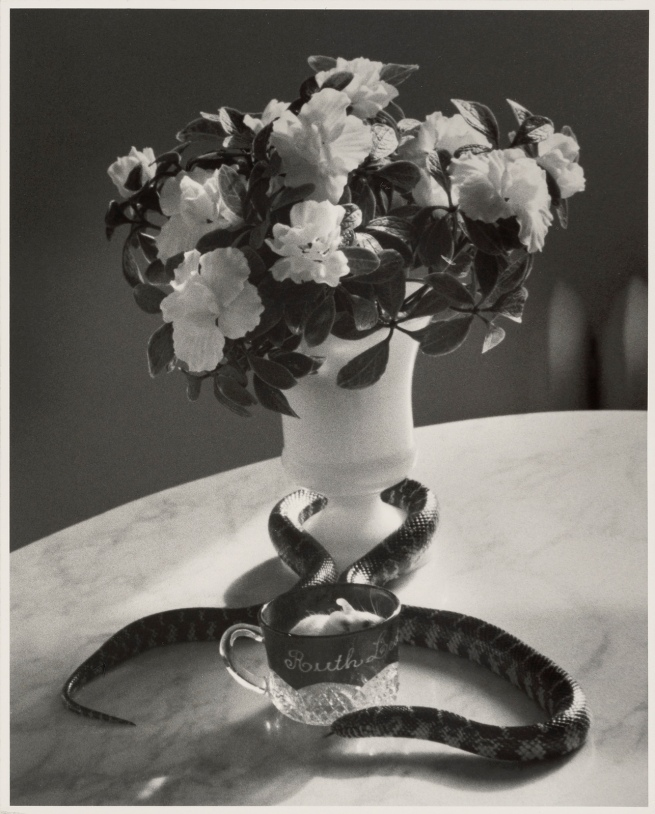 André Kertész (American, born Hungary, 1894-1985) 'Still Life with Snake' Negative 1960; print later