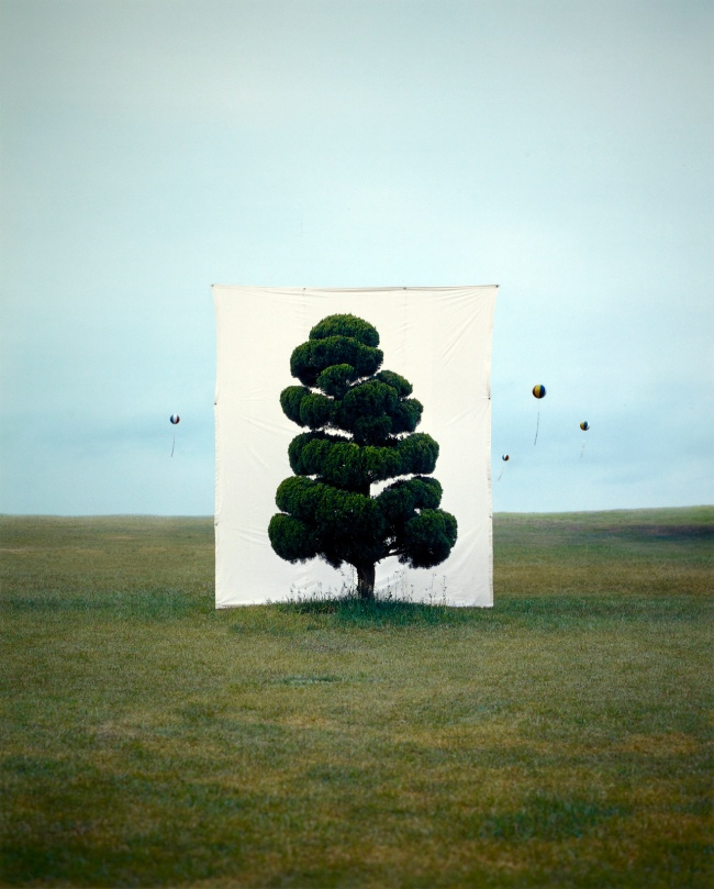Myoung Ho Lee (South Korean, b. 1975) '[Tree #2]' 2006