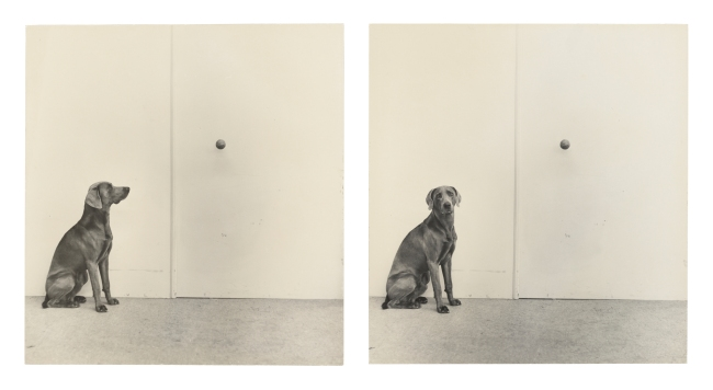 William Wegman (American, b, 1943) 'Dog and Ball' 1973