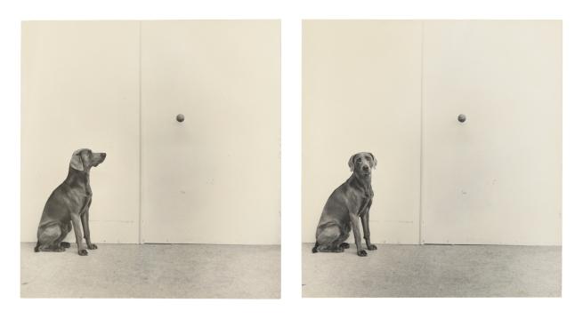 William Wegman (American, b, 1943) 'Dog and Ball' 1973