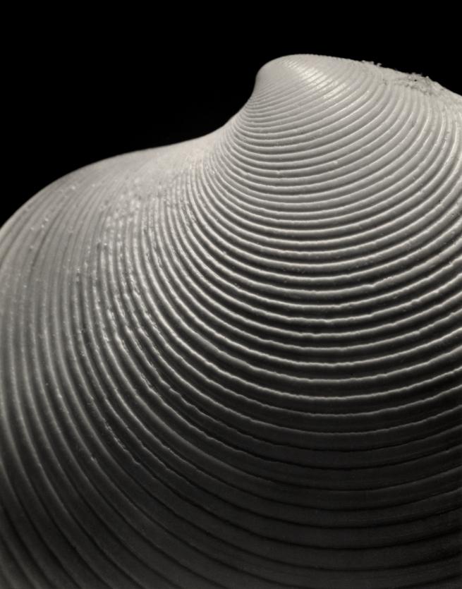 Andreas Feininger (American, born France, 1906-1999) 'Elegant Disk Clam, dosinia elegans, Conrad' 1948