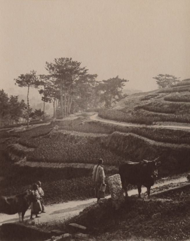 John Thomson (Scottish, 1837-1921) 'Road to the Plantation' 1870-1871