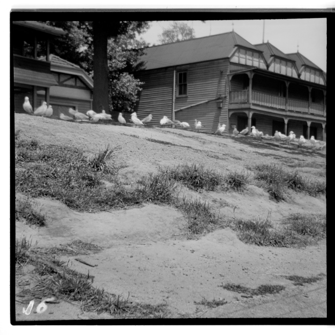 Unknown photographer (Australian) 'Untitled (Seagulls, rowing sheds on the Yarra River, Melbourne)' 1946-47