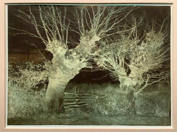 SKY TREE INTERPLAY Nature FOUND PHOTOGRAPH  Original Snapshot VINTAGE 94 7 Z