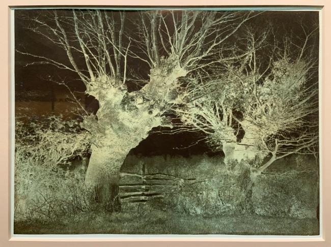 Benjamin Brecknell Turner (British, 1815-94) 'Hedgerow Trees, Clerkenleap' 1852-54