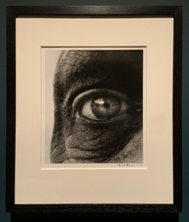 Bill Brandt (British, 1904-83) 'Dubuffet's Right Eye' 1960-63