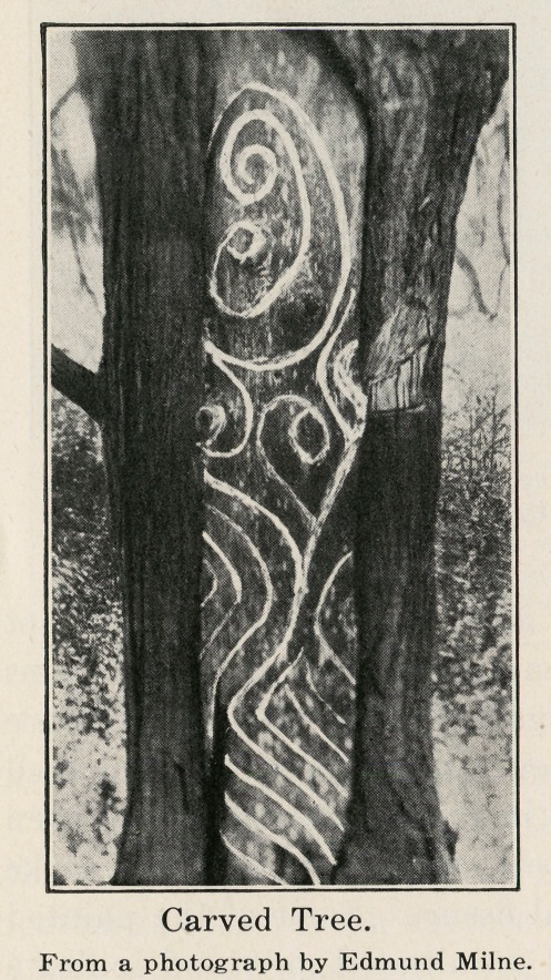 Carved Tree. From a photograph by Edmund Milne