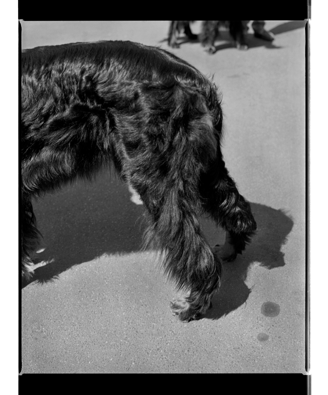 Marcus Bunyan. 'Untitled' from 'Dogs, chickens, cattle and cows' 1994-95