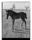 Marcus Bunyan. 'Foal' from 'Horses, sheep' 1994-95