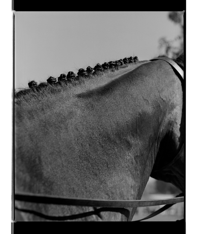 Marcus Bunyan. 'Button braids' from 'Horses, sheep' 1994-95