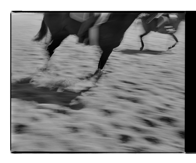 Marcus Bunyan. 'Untitled' from 'Horses, sheep' 1994-95