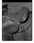 Marcus Bunyan. 'Saddle' from 'Horses, sheep' 1994-95
