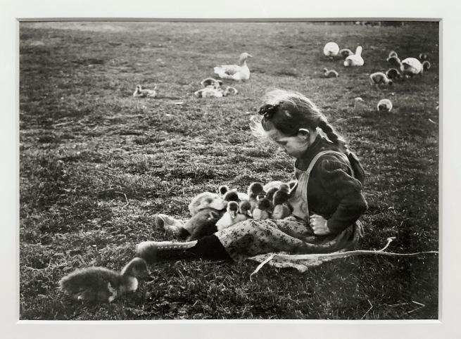 André Kertész (Hungarian, 1894-1985) 'Petites oies, Esztergom''Little geese, Esztergom' 1918 (installation view)