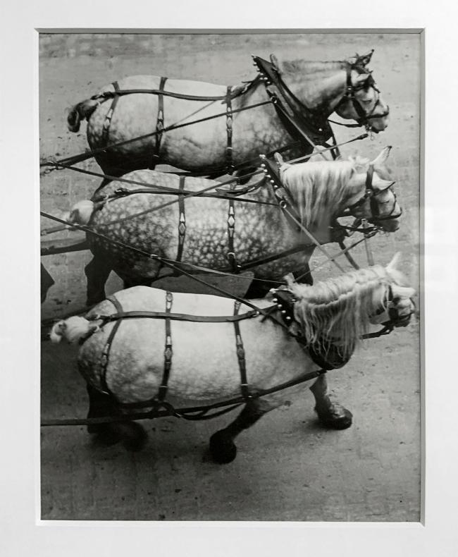 André Kertész (Hungarian, 1894-1985) 'Attelage, Paris' 'Coupling, Paris' 1925 (installation view)