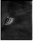 Marcus Bunyan. 'Afterlife' 1992-94
