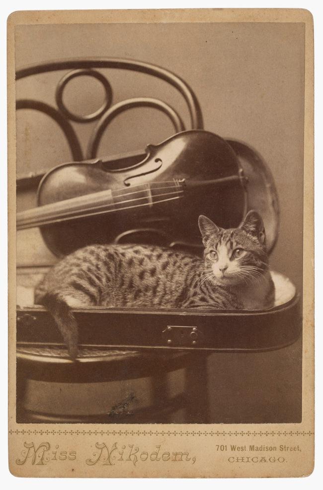 A. M. Nikodem, Chicago, IL. '[Cat]' 1880s