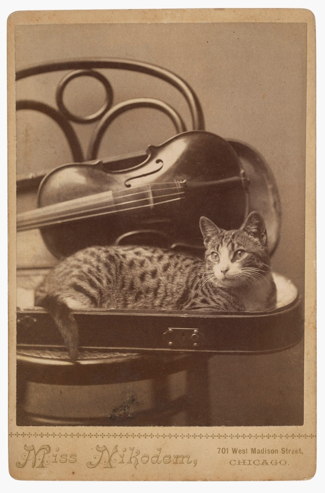 A. M. Nikodem, Chicago, IL. '[Cat]' 1880s